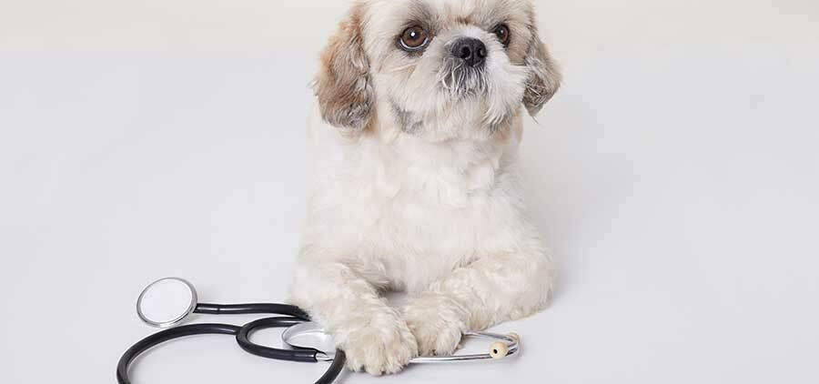 opiniones-master-veterinaria